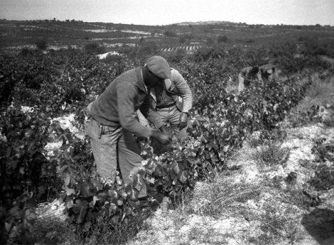 Brigadistas internacionales ayudando a los payeses en las tareas del campo en Priorat (Tarragona)