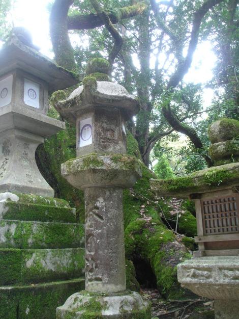 35 Nara