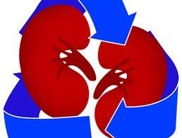 donante de organos